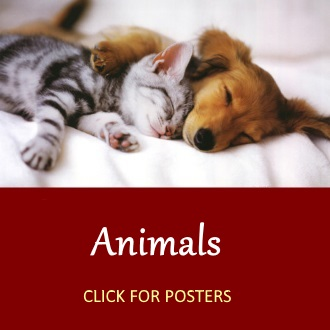 cute animal posters